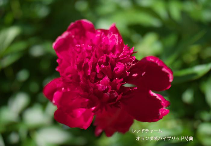 P5094778.jpg