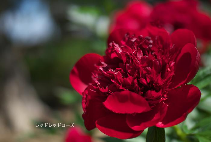 P5094794.jpg