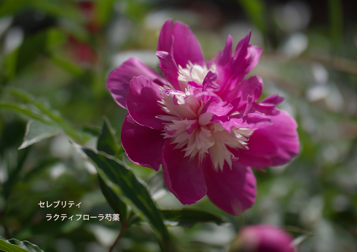 P5094798.jpg